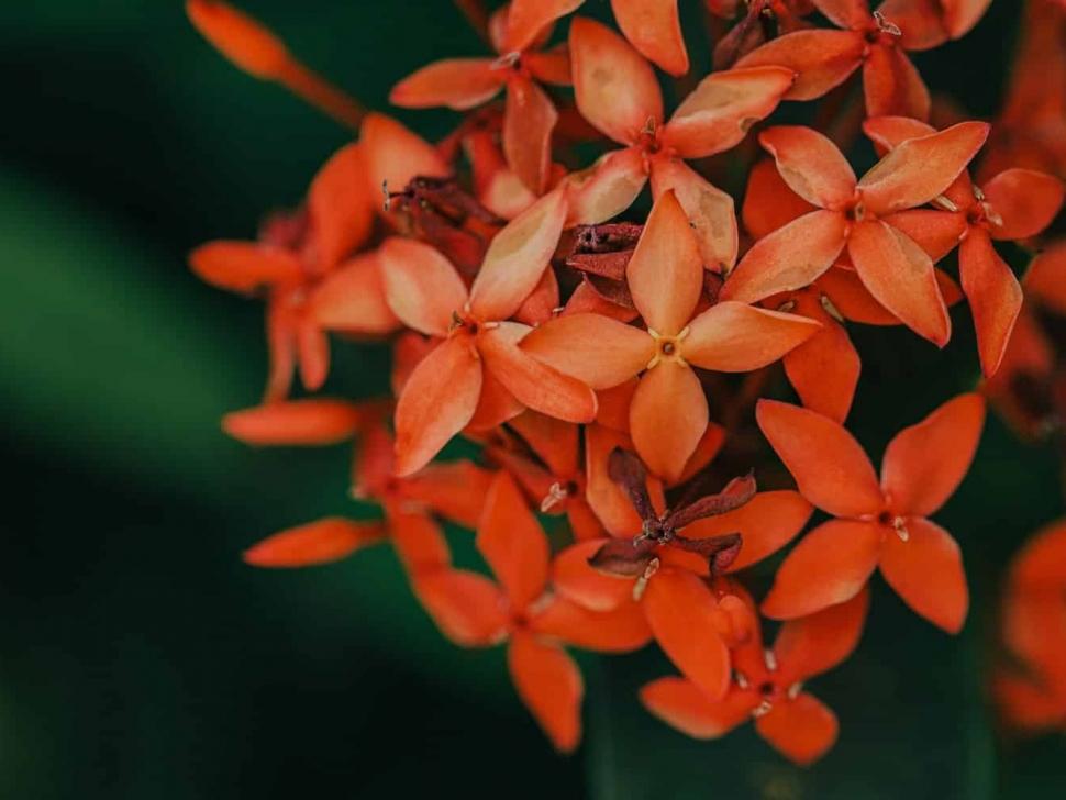 nature-photography-jesi-cason-20